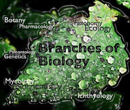 Biology Branches